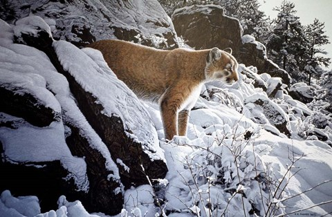 Framed Winter Lookout- Cougar Print