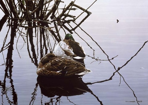 Framed Still Water - Mallards Print