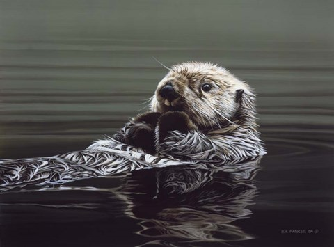 Framed Just Resting - Sea Otter Print