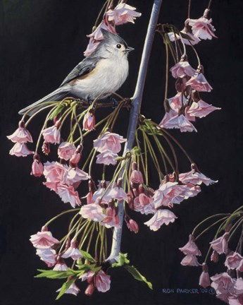 Framed Titmouse And Blossoms Print