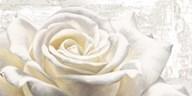 White on White  Fine Art Print