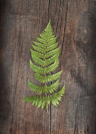 Framed Woodland Fern I Print