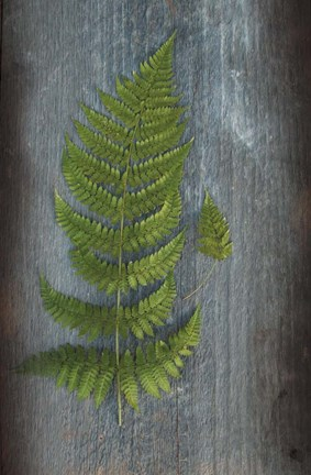 Framed Woodland Fern V Print