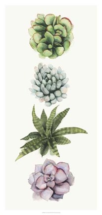 Framed Row of Succulents II Print