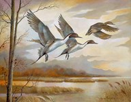 Pintails Art