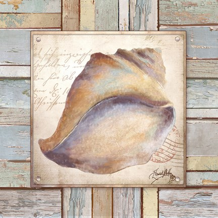 Framed Beach Shell II Print
