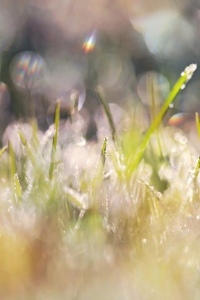 Framed Soft Morning Dew II Print