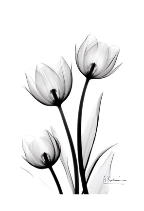 Framed Tulips High Contrast Print