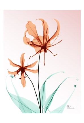 Framed Gloriosa Lily Corals Print