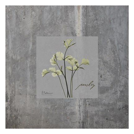 Framed Concrete Parsley Print