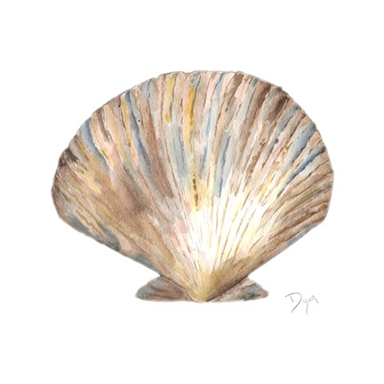 Framed Sea Shell Neutral 2 Print