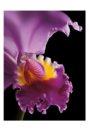 Framed Purple Orchid Print
