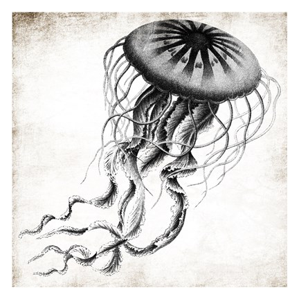 Framed Jellyfish Ink Print