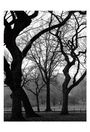 Framed Central Park Dancing Trees Print