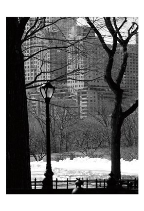 Framed Central Park Concrete Forest Print
