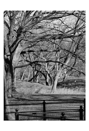 Framed Central Park Image 1745 Print