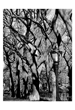 Framed Central Park Image 1744 Print