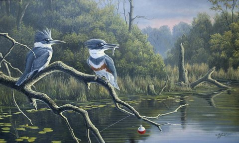 Framed Fisherman's Luck, Belted Kingfishers Print
