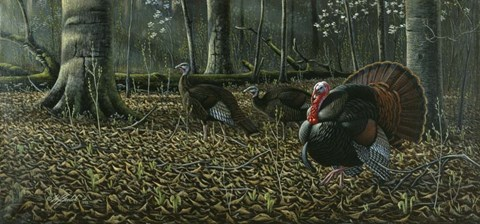 Framed Suitor - Wild Turkeys Print