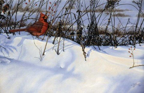 Framed Winter Cardinal Print
