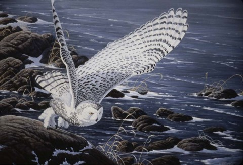 Framed Winter Shore - Snowy Owl Print