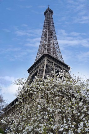 Framed Eiffel Tower with Blossoming Magnolia Print
