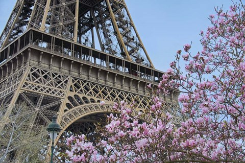 Framed Eiffel Tower with Pink Magnolia Print