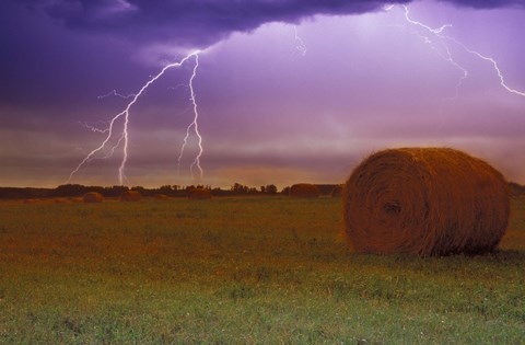 Framed Lightning Over Hay Fields Print