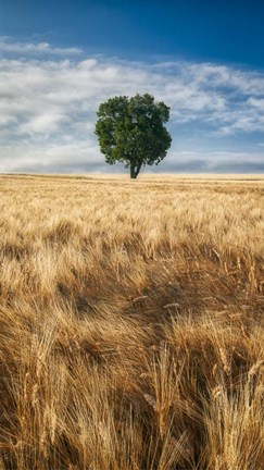 Framed Lone Tree in Wheat Field Print