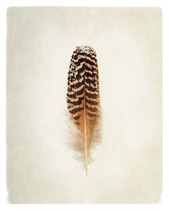 Framed Feather I Print