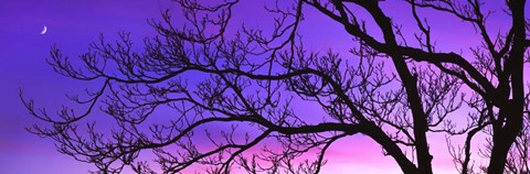 Framed Tree at Dusk, Purple Sky Print