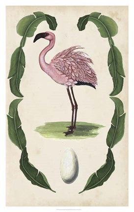 Framed Antiquarian Menagerie - Flamingo II Print