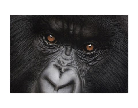 Framed Eyes of Virunga: Mountain Gorilla Print
