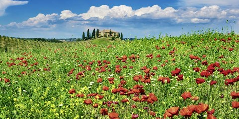Framed Farm House with Cypresses and Poppies, Tuscany, Italy Print