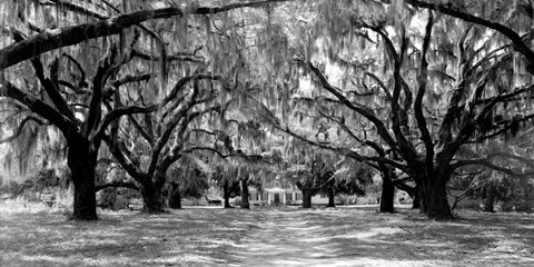 Framed Avenue of Oaks, South Carolina Print