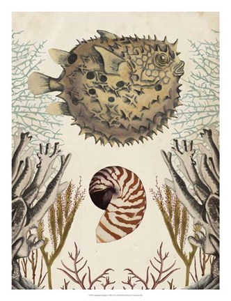 Framed Antiquarian Menagerie - Puffer Fish Print