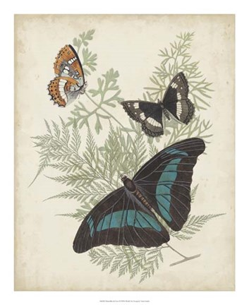 Framed Butterflies & Ferns II Print