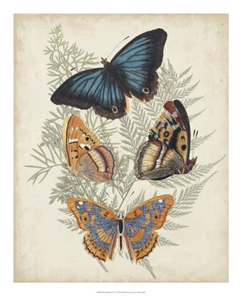 Framed Butterflies & Ferns V Print
