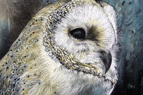 Framed Barn Owl Detail Print