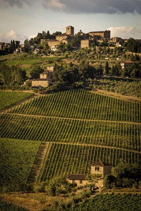 Framed Tuscany Vineyard 02 Print