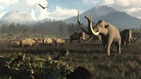 Framed Columbian Mammoths And Bison Roam The Ancient Plains Of North America Print