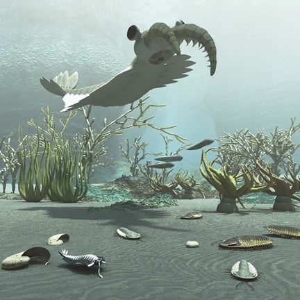 Framed Animals And Floral Life From The Burgess Shale Formation Of The Cambrian Period Print