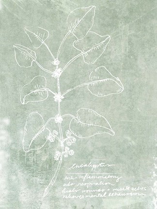 Framed Essential Botanicals I Print