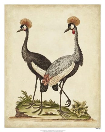 Framed Antique Bird Menagerie VII Print