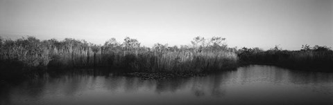 Framed Tall grass at the lakeside, Anhinga Trail, Everglades National Park, Florida Print