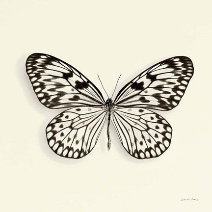 Framed Butterfly V Print