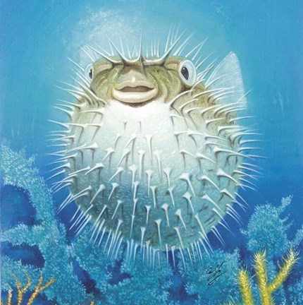Puffer fish fine art print by durwood coffey at for Puffer fish price
