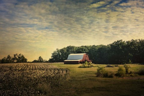 Red Barn At The Cotton Field Fine Art Print By Jai Johnson