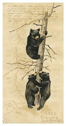 Black Bears Fine Art Print By Anita Phillips At