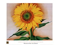 A Sunflower from Maggie, 1937 Art